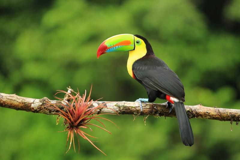 ג'ימבוכיף: פעילות חיות